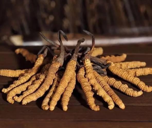 冬虫夏草需要长期吃吗?哪些人群适合长期服用冬虫夏草呢?