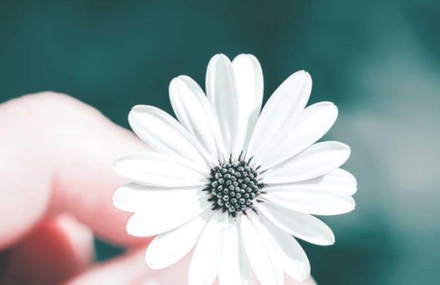爱情经历得越多越喜欢用真心去对待的星座