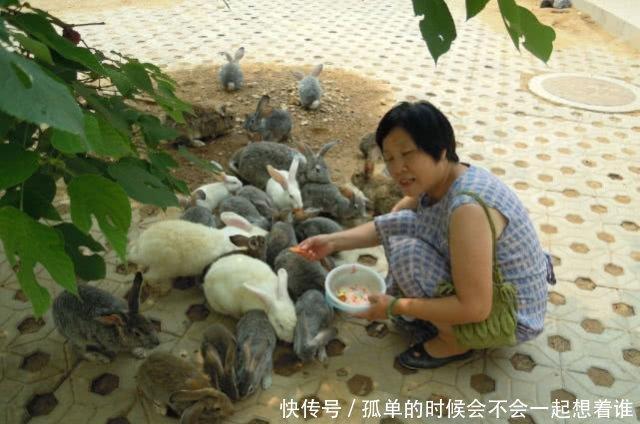 『兔子』兔子一个月生一窝,繁殖速度比肩老鼠,为何农村没人养兔致富