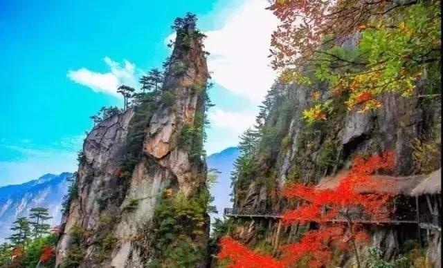 藏在临安山野美景秘境中的野奢帐篷民宿,酷似一副色彩绚丽的油画,美眉鲜果蛋糕店
