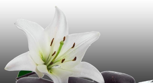 趣味测试:你觉得哪种花最漂亮?测一测你在恋爱后颜值会不会提升