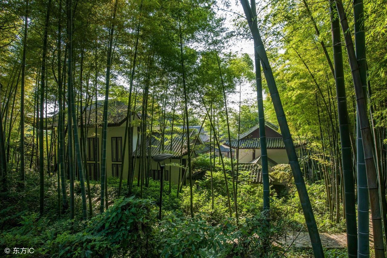 重庆永川有个地方叫做茶山竹海,景色美丽值得游玩一番!