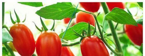 『食物』春天来了,不妨多吃此食物,补充钙质,提高免疫,早吃早受益