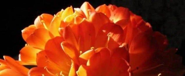 心理测试:你最喜欢哪一朵花?测你的情商赢过了多少人!