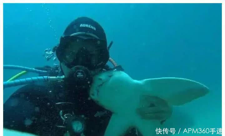 「还要」男子和鲨鱼成好朋友,潜水7年它陪了他7年,见面还要抱