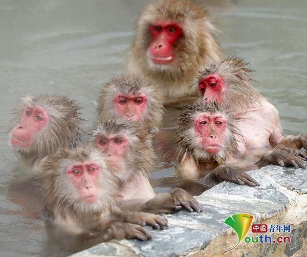 日本北海道群猴池中泡澡 惬意又自在