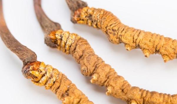 冬虫夏草怎么吃效果更佳 如何处理服用