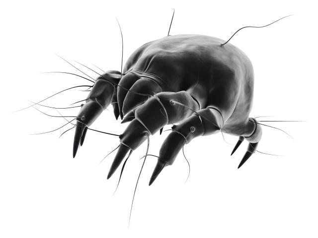 脸上有螨虫是什么症状 如何有效缓解