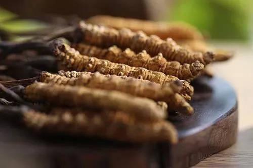 在没吃冬虫夏草前,请不要对它指手划脚!因为4类人吃它特有效!