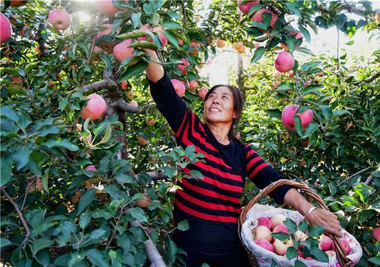卢龙县大力发展林果种植业果树满坡富农家