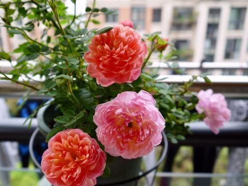 『庭院』养花就养色泽鲜艳的,养在家里花香怡人,枝繁叶茂,庭院变花海