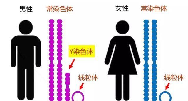 最新基因检测发现改写古代中国历史,姬周宗室可能来自这个族群