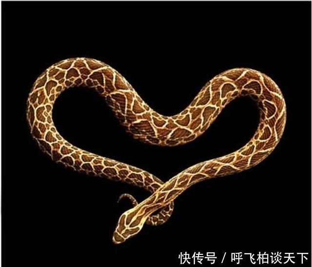 """「越毒的蛇越美丽」美国摄影师马克?莱塔的影集——""""蛇纹"""""""