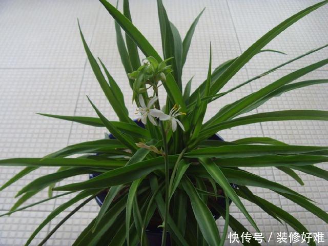 啥花都可以不养,这4盆家里一定要有,对身体健康有益处