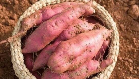 受益@原来保存红薯方法这么简单,教你1招,越放越甜,早知早受益