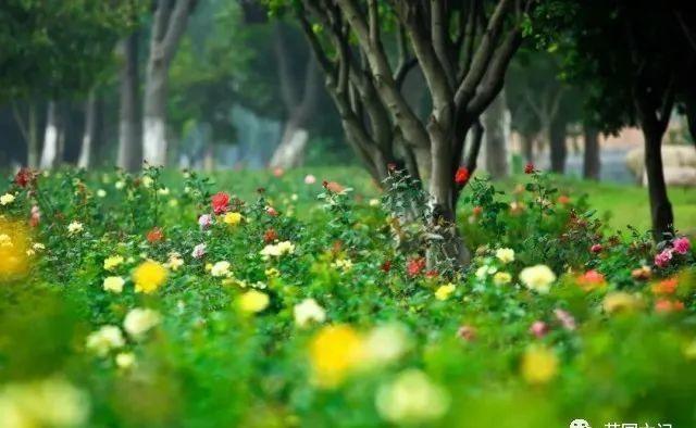 本周日苏州又有三家景区恢复开园【2020热门旅游景点】