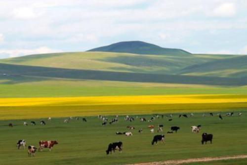 中国最大的草原!最纯净的草原,总面积10万平方千米