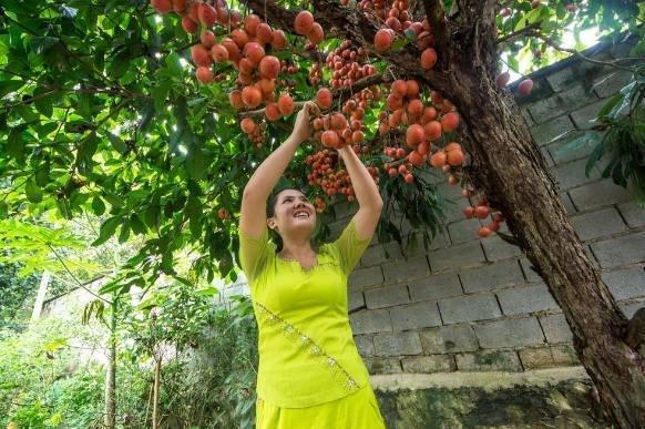村里有地别慌着了!不妨种这些果树,营养又好吃,吃不完还能卖