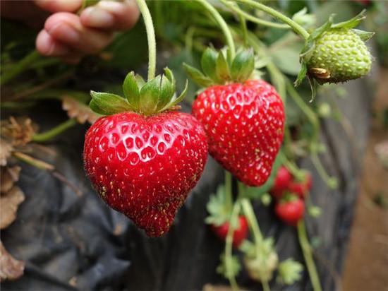 糖尿病人别拒绝这6种水果,常吃对血糖好!
