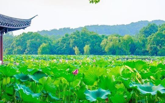 一个人去杭州,杭州伴游随身陪伴,让您旅途不再迷茫