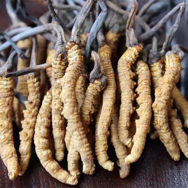 冬虫夏草怎么吃?如何吃效果最好?冬虫夏草吃错了没有一点效果