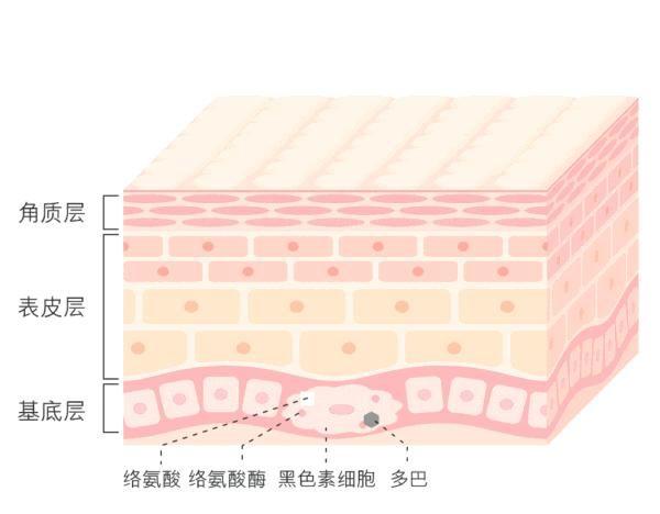 「素细胞」美白皮肤的关键物质烟酰胺要怎么选择?选对物质,才能事半功倍