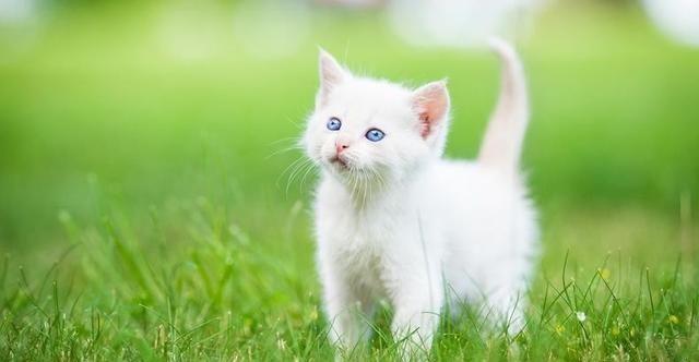 养一只猫的前提:猫奴要先了解这些问题