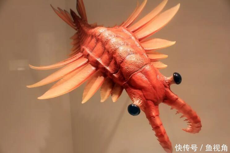 """地球的第一任霸主,是十足的战争机器,但谁想到会是一只""""虾""""?"""