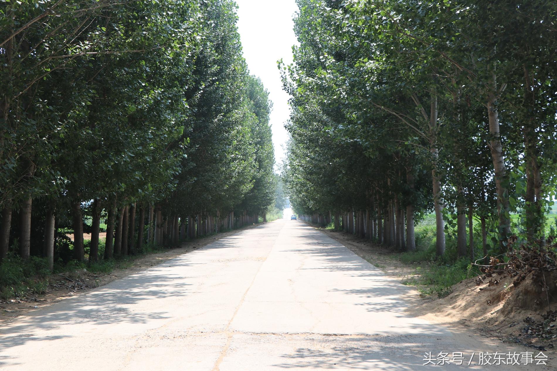 """组图:青岛莱西这个村的规模很小,名字就叫""""小屯"""""""