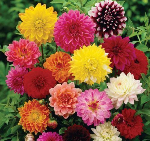「值得」可以养护在家庭庭院的3个花卉,不养是你的损失,值得拥有的花卉
