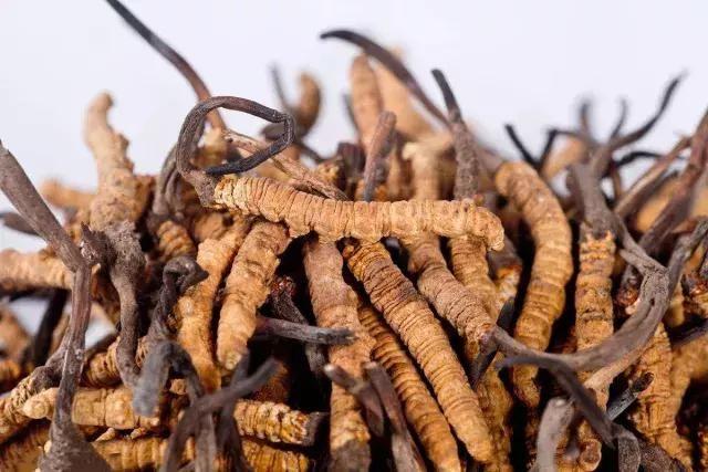 2018年最新冬虫夏草价格表,藏民告知那曲虫草的产地价让您不上当