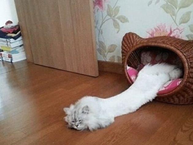 """網友們為了論證貓是""""液體"""",不僅拍了照,還做了手辦畫了圖"""