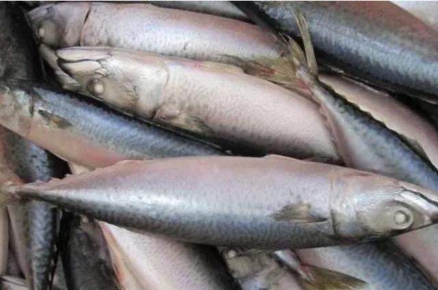 『适合』适合孩子吃的6种鱼,刺少肉多关键还美味,多吃能补脑补钙还长个