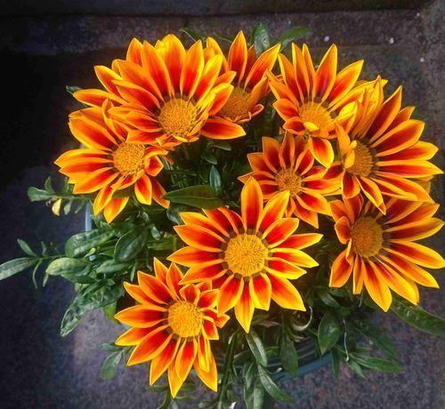 """「韵味」这几款灿烂多姿的花卉,开花""""惊艳"""",香飘满屋,韵味十足,美"""