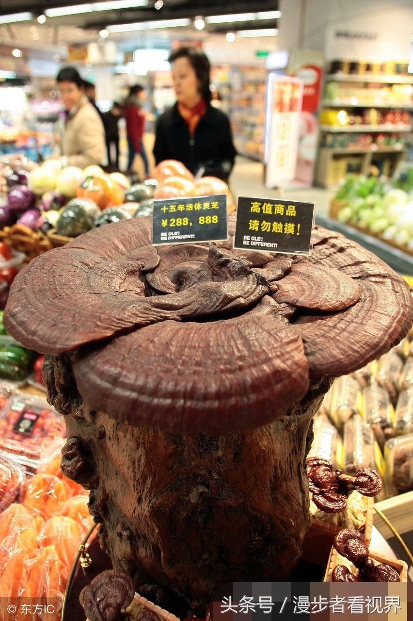 上海一株15年活体灵芝,售价288888元,市民看后匆匆走了