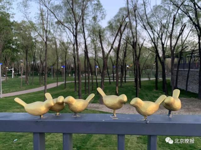 世园会100多只金色小鸟被顺走仅剩17只,谁干的!