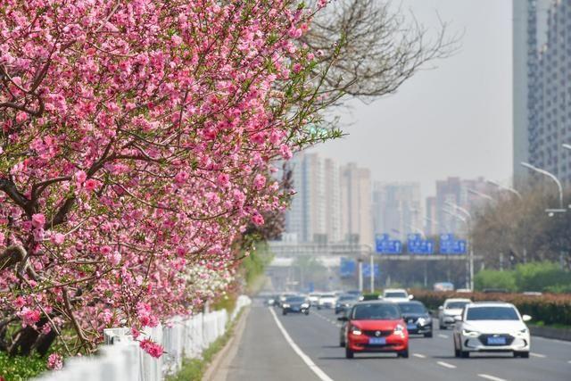 """春暖花开,南二环现""""百米芳华"""""""