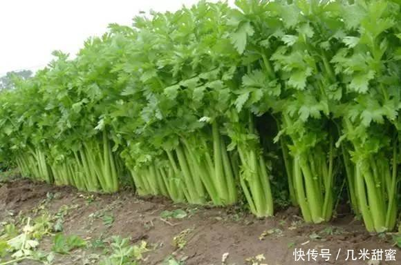 吃惊!这盘菜降压降糖还抗癌,还是世界上用的最广的一种草药!