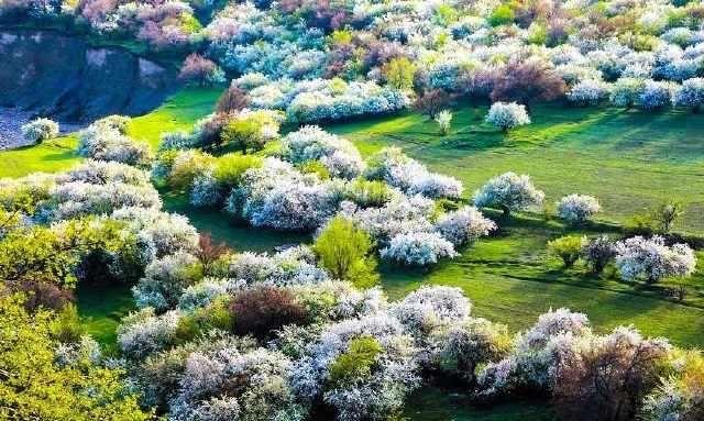 三月,高地上那一树的花开