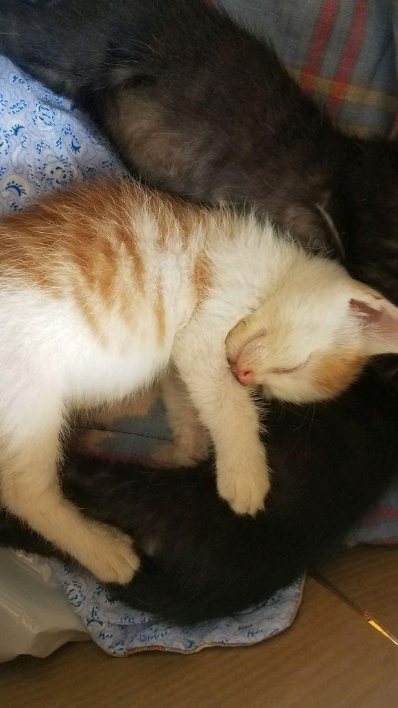晨跑回来捡到两只小奶猫,三个月后直接大变身,邻居都说捡到宝了