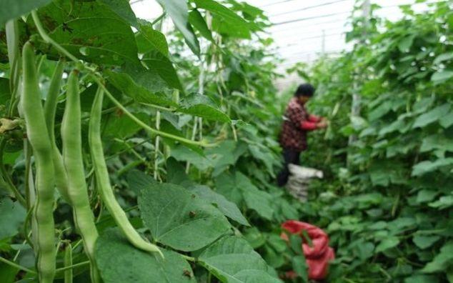枣庄四大传统名优农产品,滕州占据两个,你知道吗