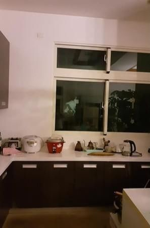 半夜发现厨房有诡异白影,而且还没有眼睛,一看原来猫咪被卡住了