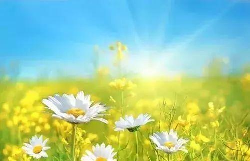 愿我们的生活,每一天都充满阳光