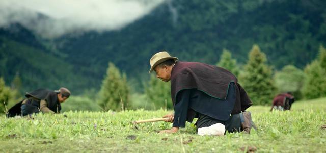 冬虫夏草的最佳服用方式是什么?