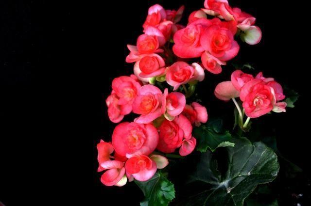 这三种花,一年四季能开花!而且比绿萝还好养、还长得快!