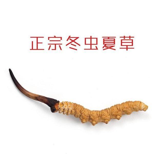 冬虫夏草虫体和草头都能吃吗?其实虫和草一起吃,功效会更好!