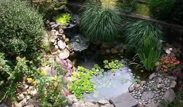 如果你有个院子,一定要有个水池!水,世间最具灵性之物优推