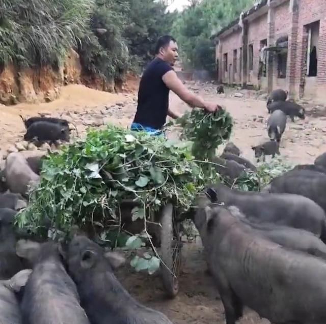 """农民养殖的""""它""""吃的都是野菜野草,一斤50元,年赚几十万!"""