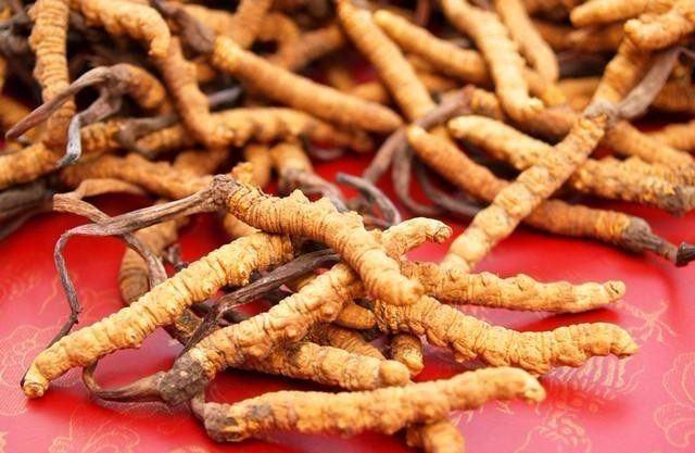 解析冬虫夏草的功效组成,吃完后身体会有很多意想不到的变化