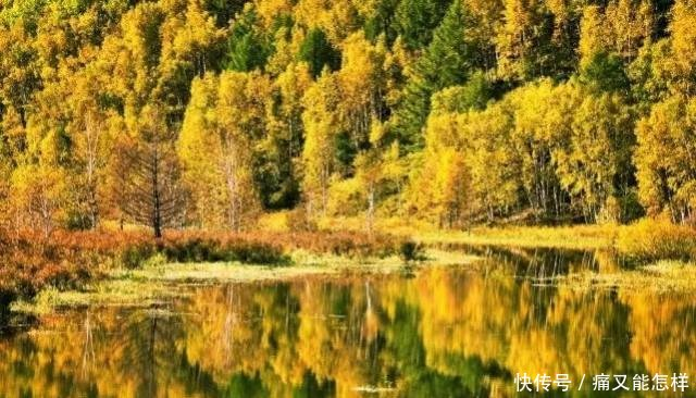 有一种美,叫阿尔山的秋